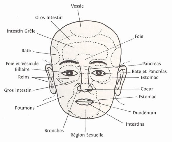 visage-organes-medecine-chinoise